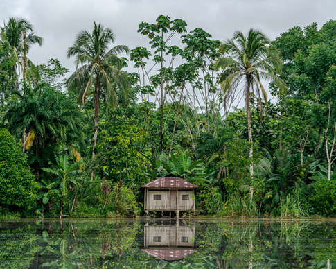 La maison dans la Jungle