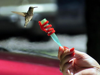HANG WITH THE HUMMINGBIRDS