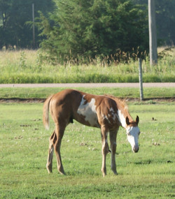 Likes pasture time...