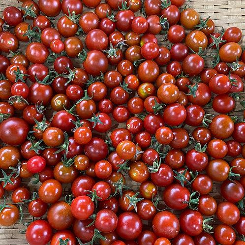 ステラミニトマト