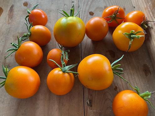 フラムトマト(中玉トマト)
