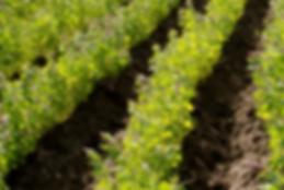 Nos dedicamos a la comercialización y exportación de productos de quinoa a nivel mundial.