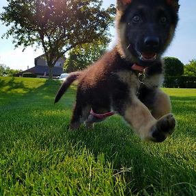 Puppy Head Stat Trainng