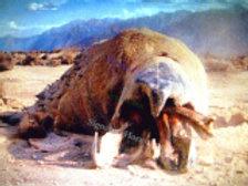 Nick Benson - Tremors Graboid Desert - 8X10