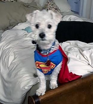 Scrappy Super Pup