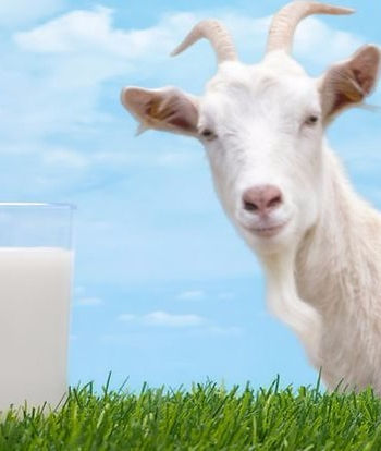 Goat Milk Extract