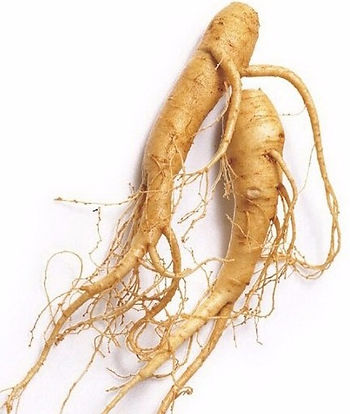 Panax Ginseng Extract