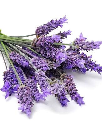 True Lavender Essential Oil