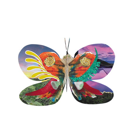 ButterflyNoBackground.PNG