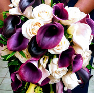 Purple calla liliy