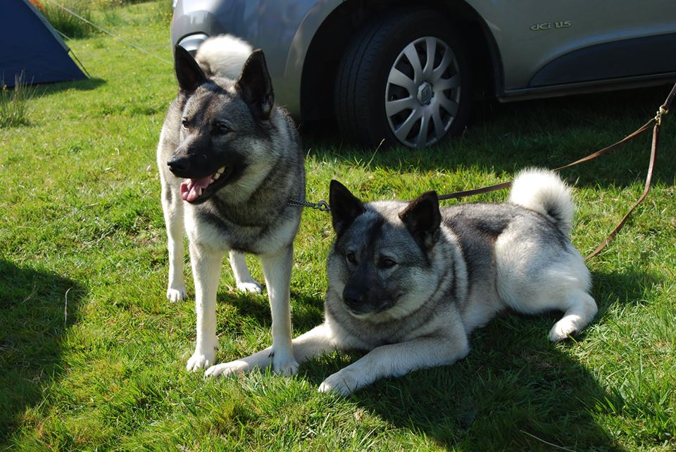 dogs at Llantrisant