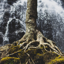 A well rooted existence