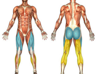 Mastering the Basic Fitness Moves - Part Two - Lunges