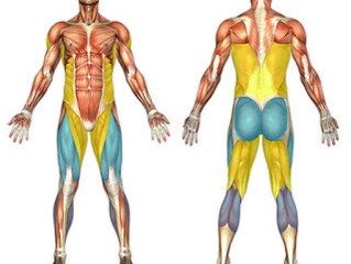 Mastering the Basic Fitness Moves - Part One - Squats