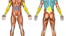 Mastering the Basic Fitness Moves - Part Three - Rows