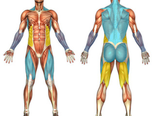 Mastering the Basic Fitness Moves - Part Four - Deadlifts