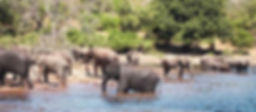 Elephants at the Chobe River