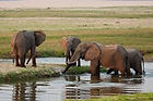Elephants at Mana Pools Zimbabwe