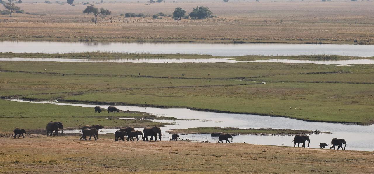 Elephants at the Chobe River