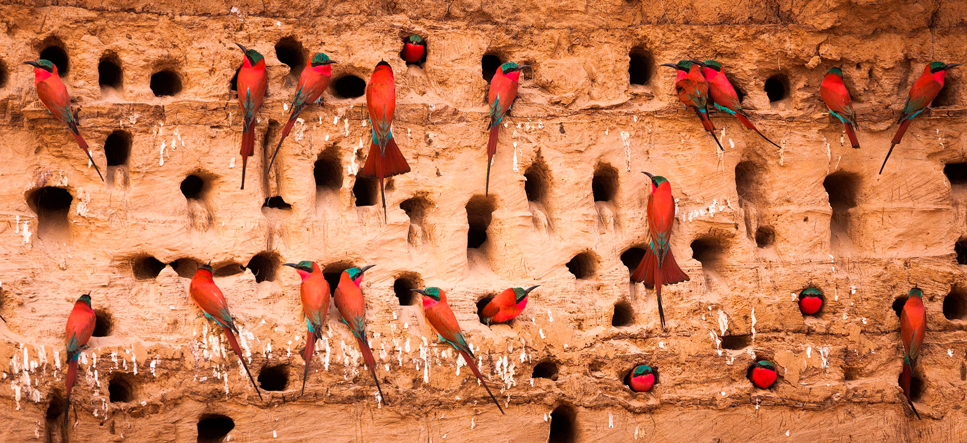 South Luangwa  (click image to view gallery)
