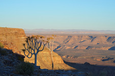 Quiver Tree at Fish River Canyon