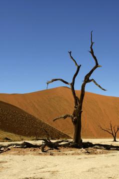Tree at Deadvlei - Namib Desert