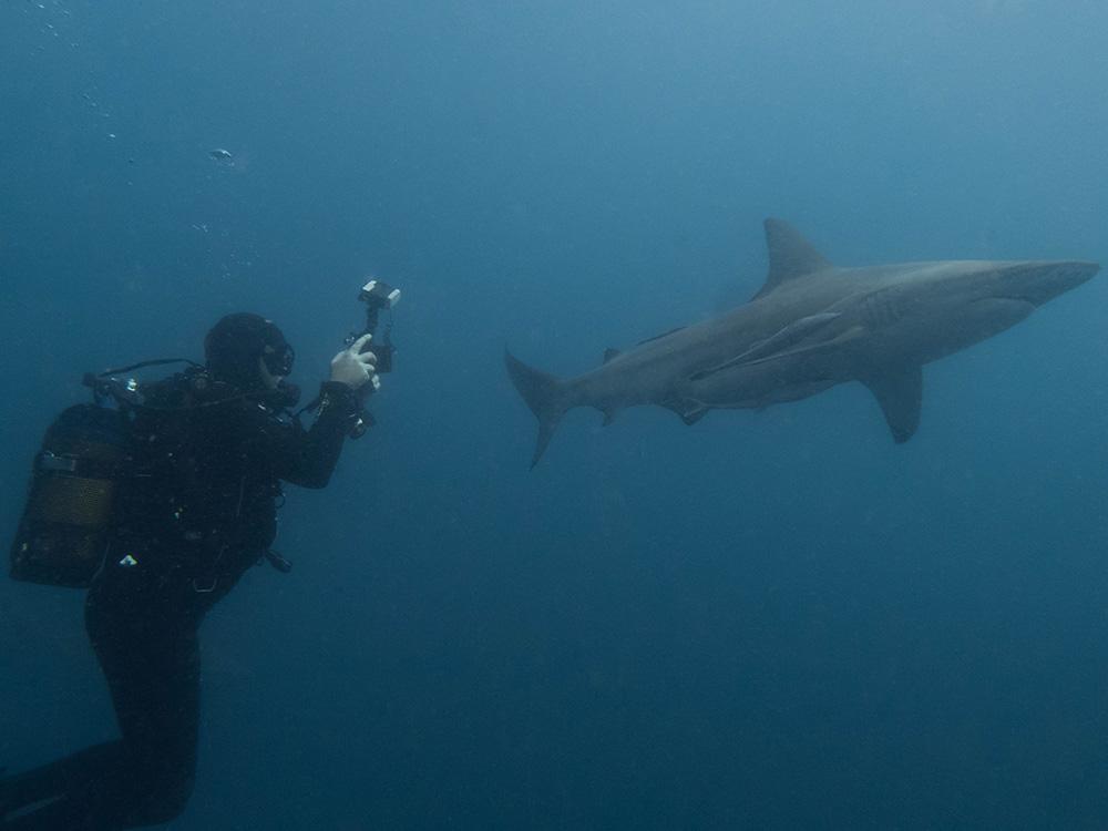 Black Tip Shark Dive