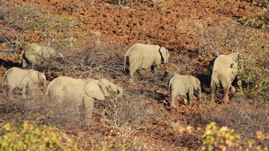 Grootberg Elephant Tracking