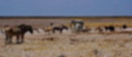 Etosha Waterhole - Namibia Safaris