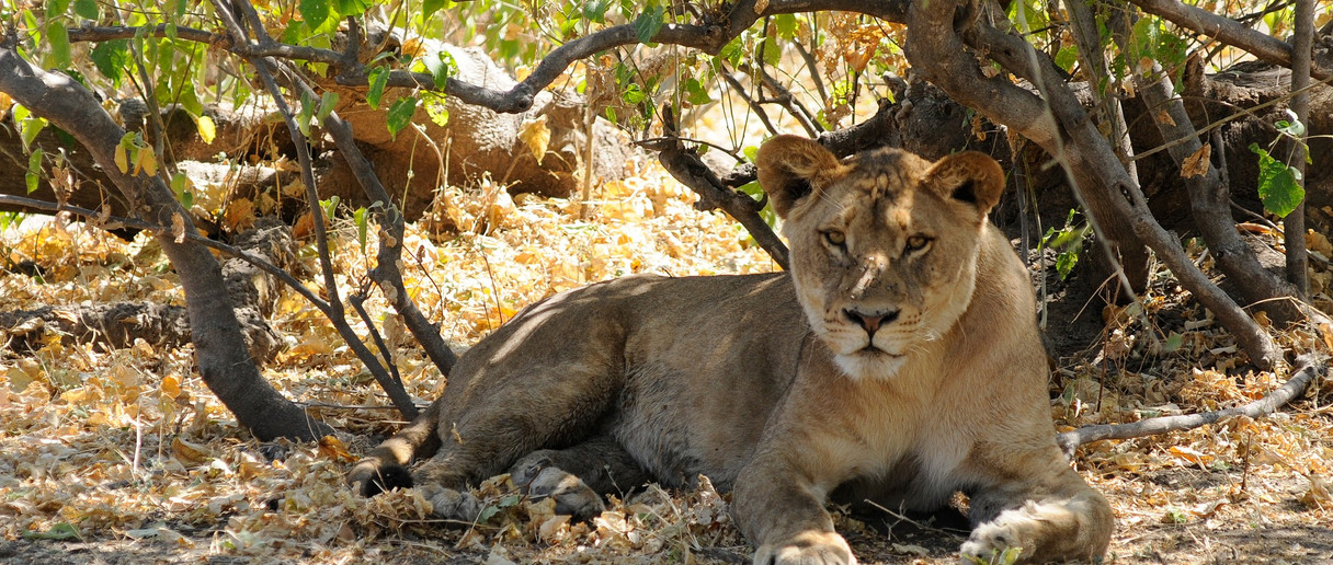 Chobe National Park  (click image to view gallery)