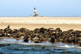 Pelican Point - Walvis Bay
