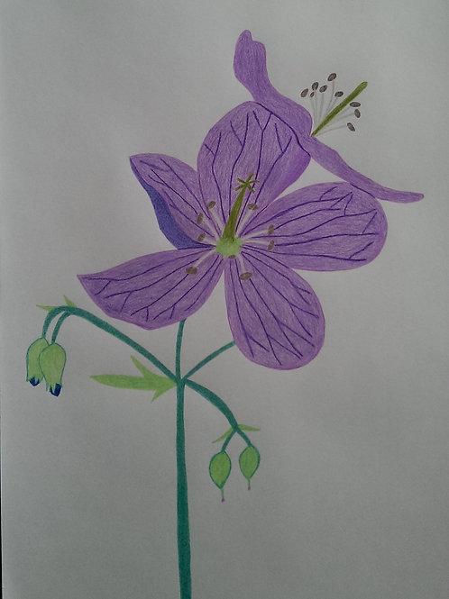 Drawing 17/16