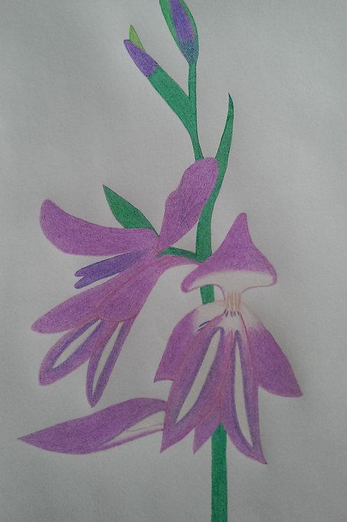 Drawing 7/16