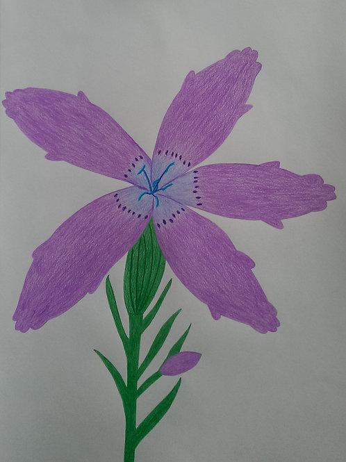 Drawing 33/16