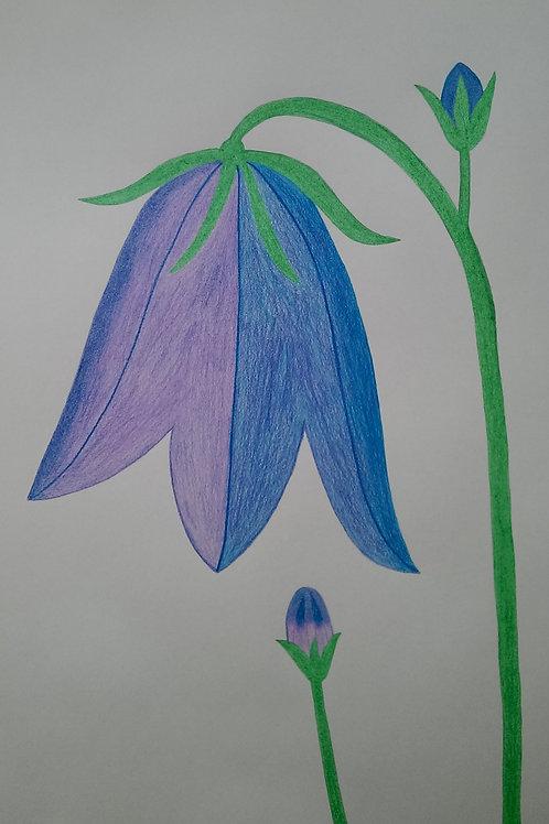 Drawing 37/16