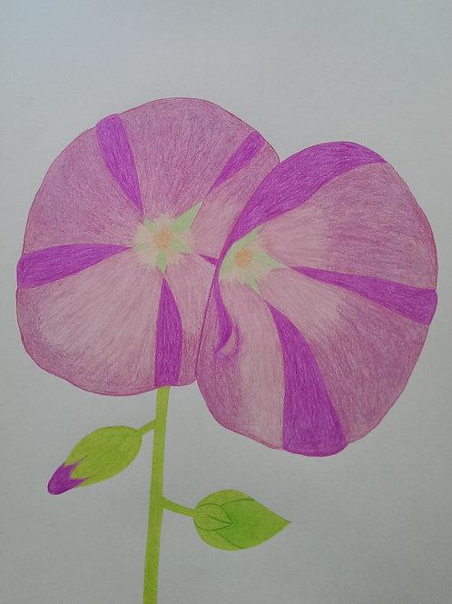 Drawing 35/16