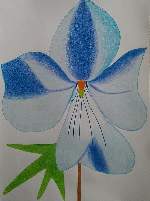 Drawing 53/16