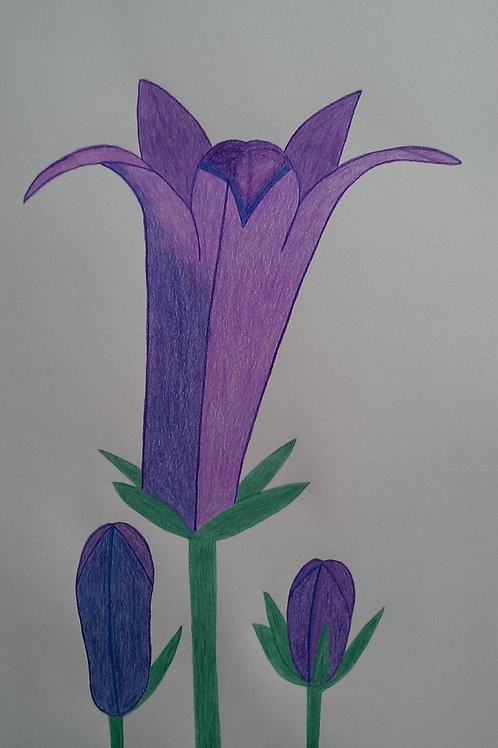 Drawing 26/16
