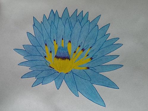 Drawing 2/16