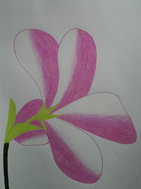 Drawing 42/16