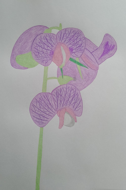 Drawing 12/16