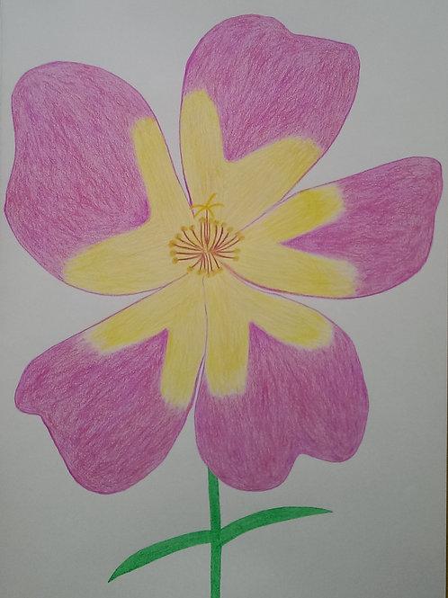 Drawing 44/16