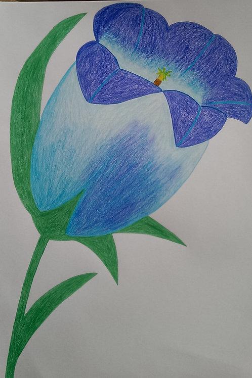 Drawing 41/16