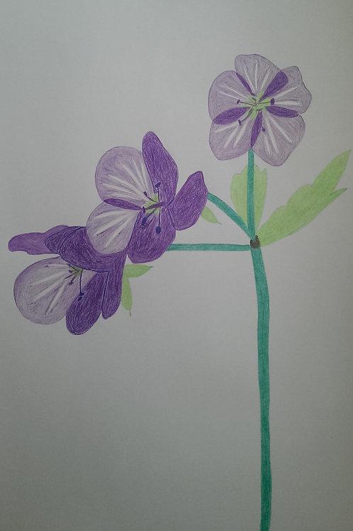 Drawing 15/16