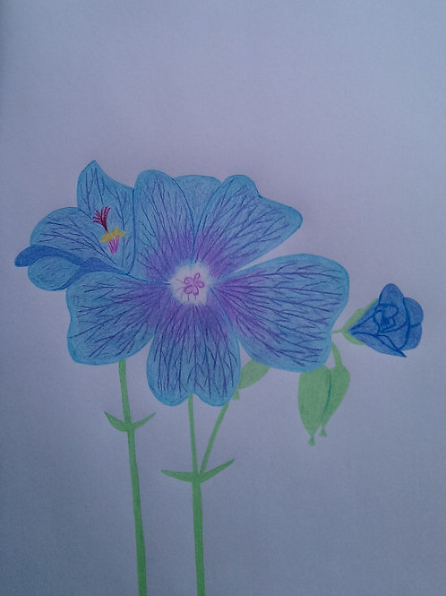 Drawing 13/16