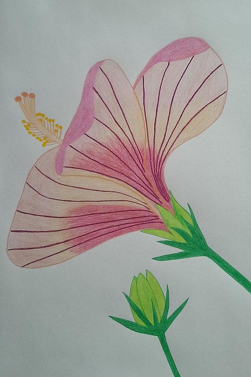 Drawing 47/16