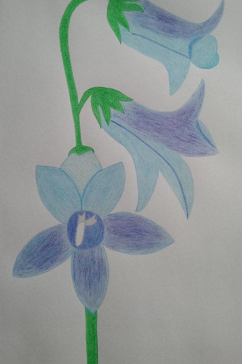 Drawing 22/16