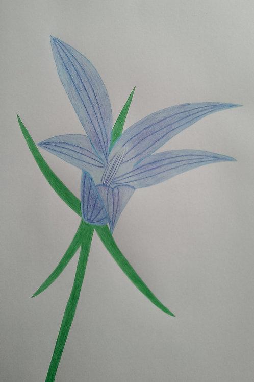Drawing 23/16