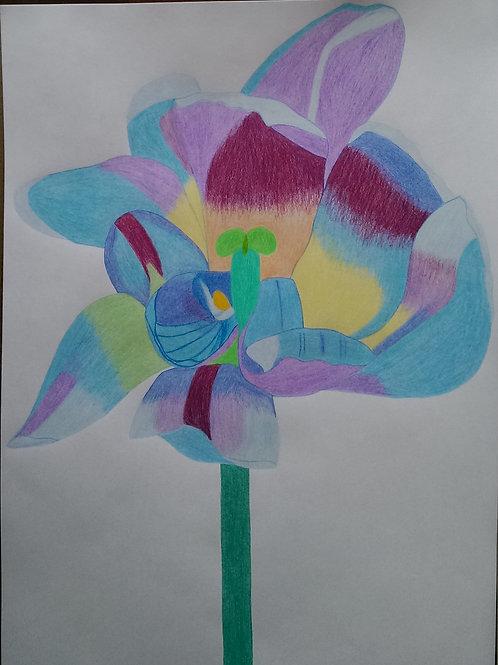 Drawing 38/2017