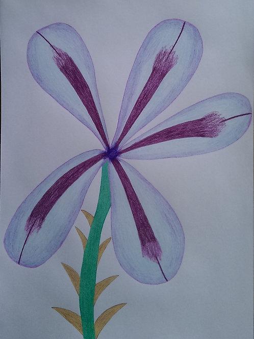 Drawing 49/16